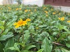 Ziyaan Virji Flower 1s