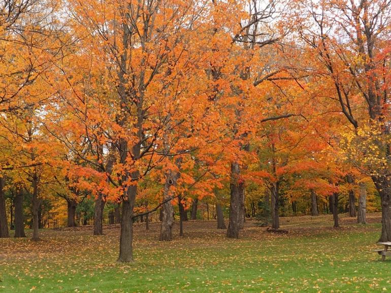 Fall colours at Rideau Hall