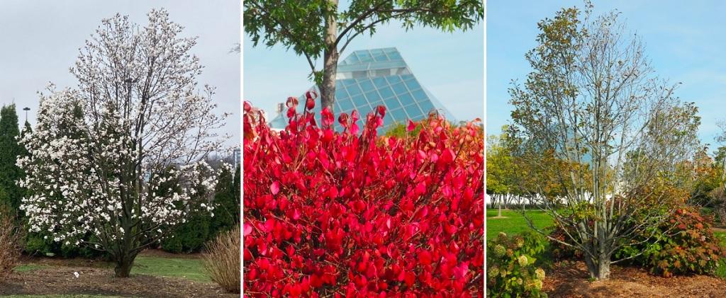 Tree # 50 Aga Khan Park, Prince Rahim 50th birthday photo tribute